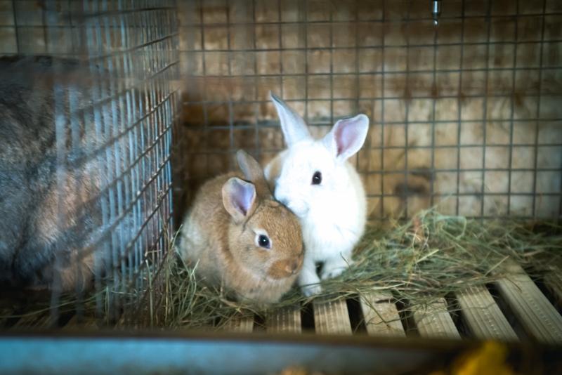 Conigli appena nati